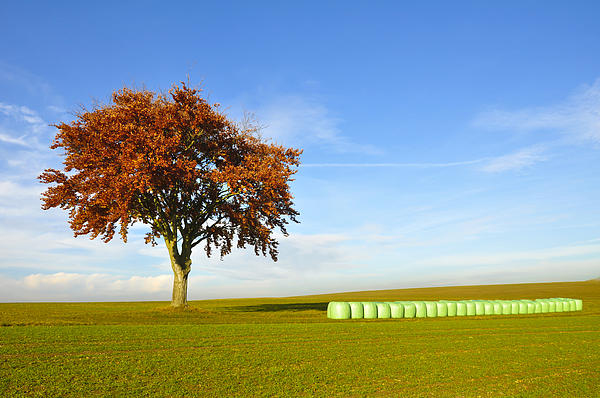 Tree And Hay Bales Print by Aged Pixel