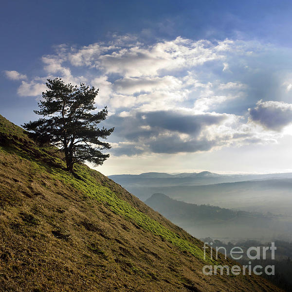 Tree And Misty Landscape Print by Bernard Jaubert