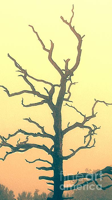 Roberta Byram - Tree at Sunset