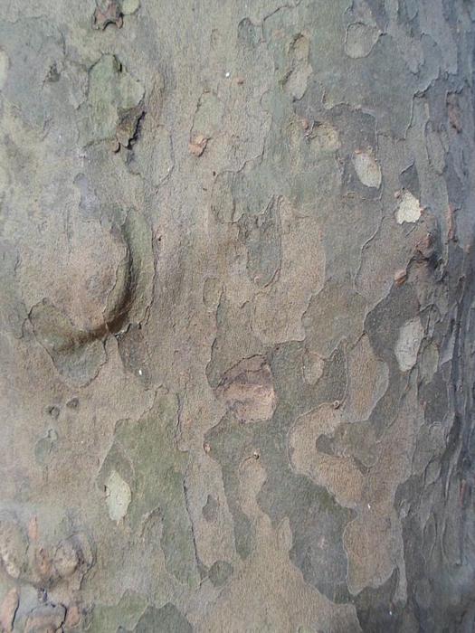Tree Bark Print by Jenna Mengersen