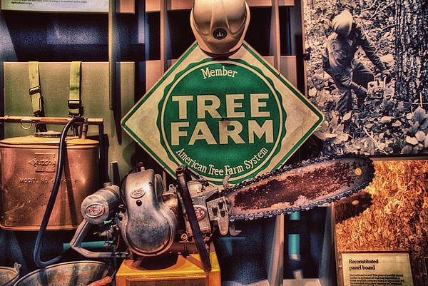 Tree Farm Print by Todd and candice Dailey
