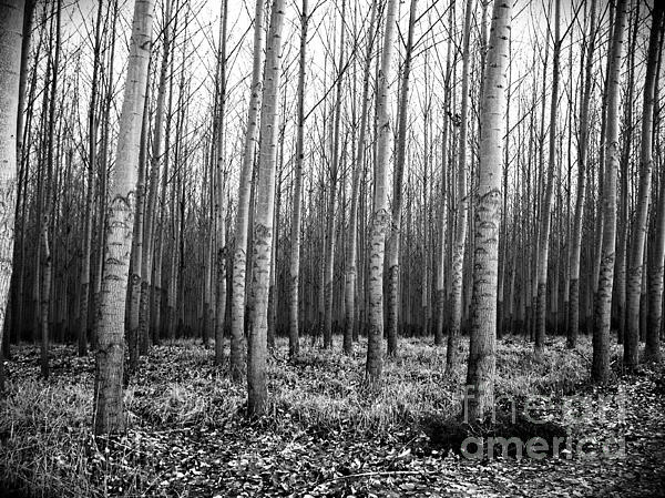 Tree Farm Print by Chalet Roome-Rigdon