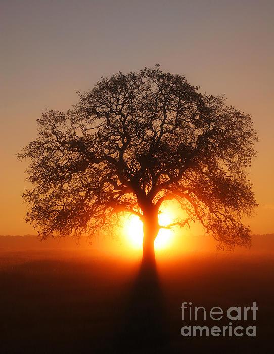 Robert Woodward - Tree Fog Sunrise