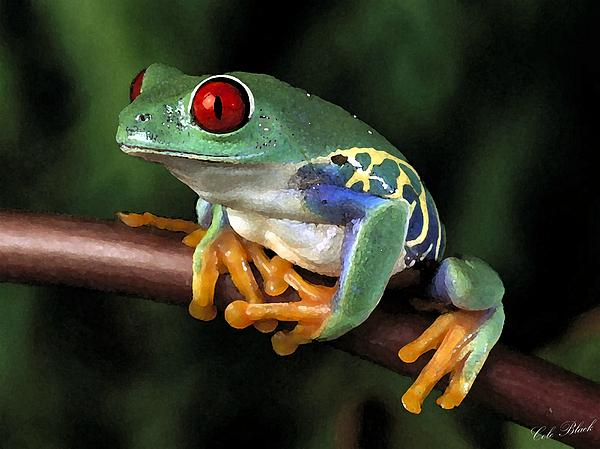 Tree Frog Print by Cole Black