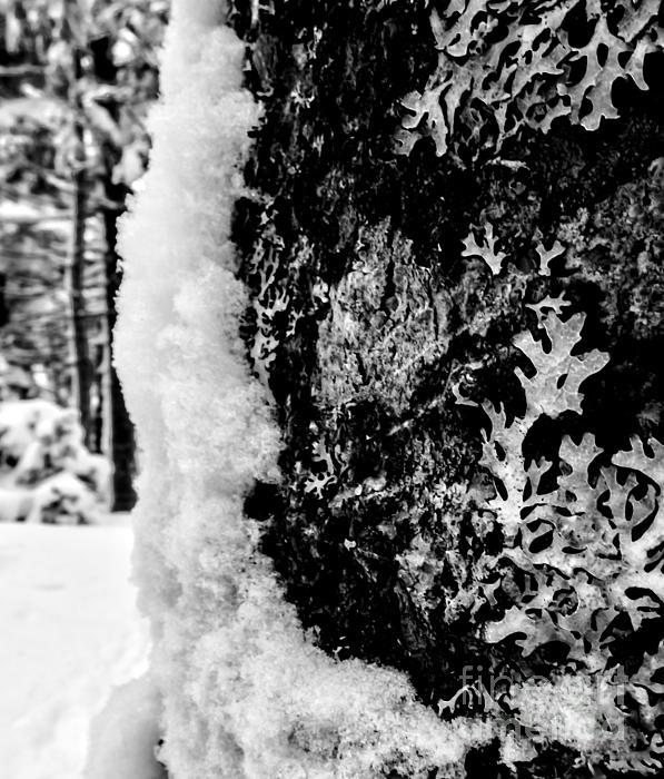 James Aiken - Tree Huggers