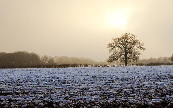 Tree In A Field On A Snowy Day Print by Fizzy Image