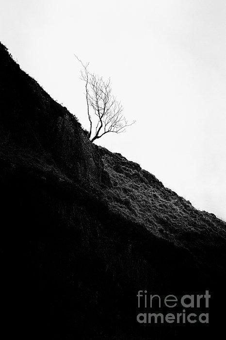 Tree In Mist II Print by John Farnan