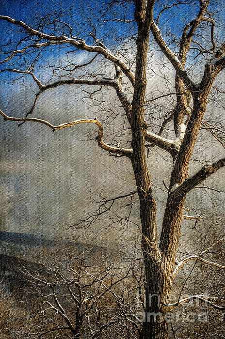 Tree In Winter Print by Lois Bryan