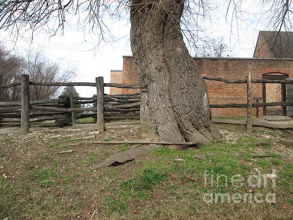 Tree Near The Gaol Print by Ezra Hoek