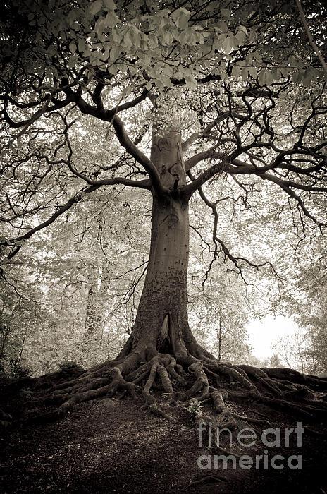Tree Of Life Print by Dominique De Leeuw