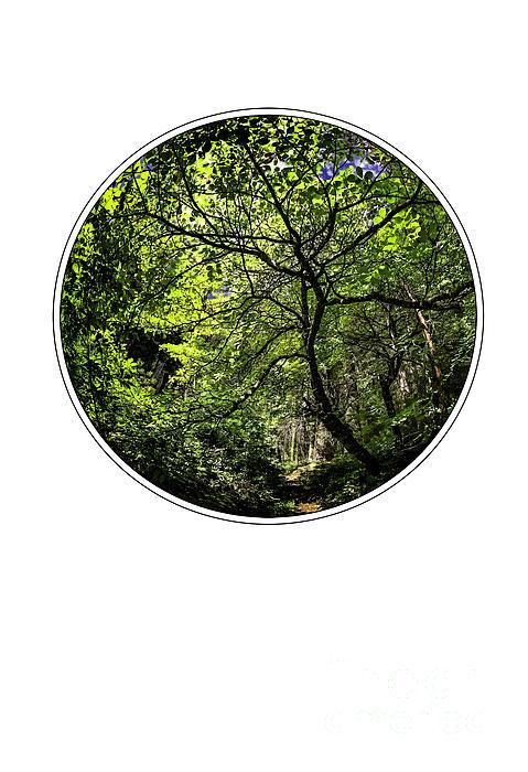 Tree Of Life Print by Holly Martin