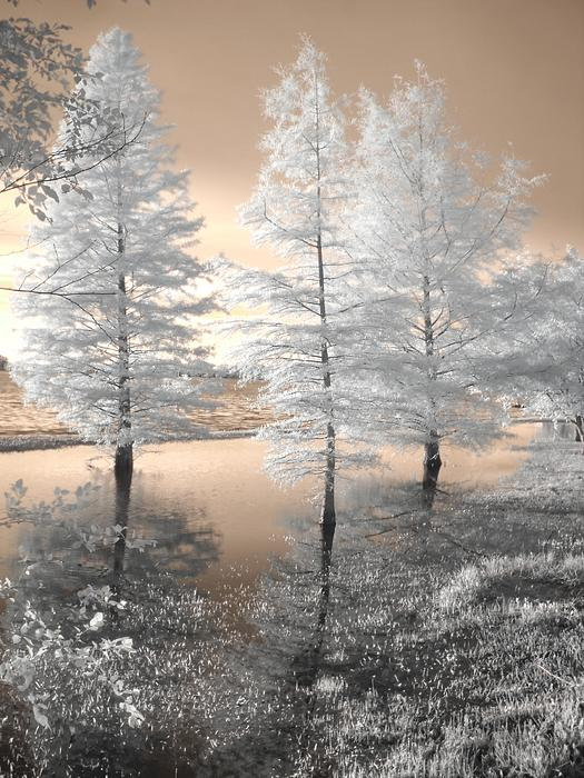 Tree Reflections Print by Jane Linders