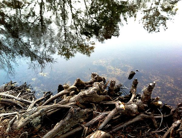 Tree Reflections Print by Robin Lewis