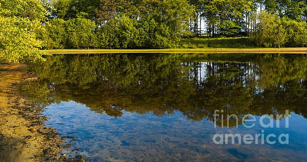Tree Reflections Print by Svetlana Sewell