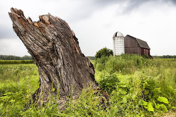 Gary Heller - Tree stump and barn - New York State