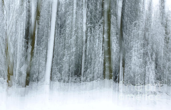 Trees And Snow Abstract Print by David Birchall