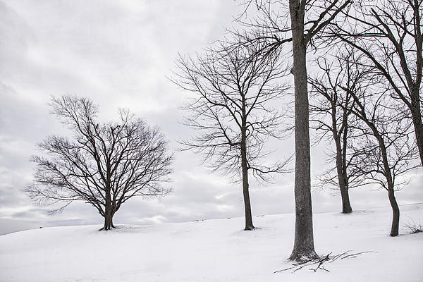 Trees And Snow Print by Wendell Thompson