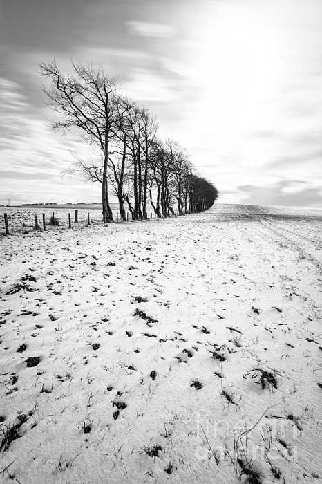 Trees In Snow Scotland II Print by John Farnan