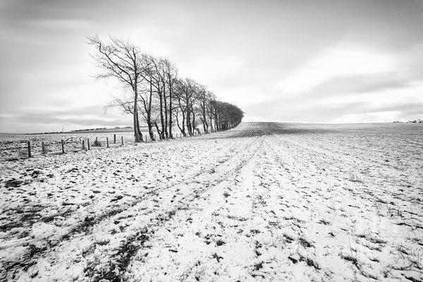 Trees In Snow Scotland V Print by John Farnan