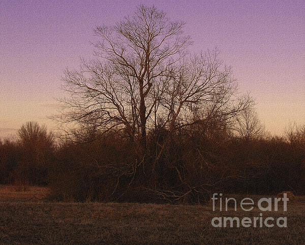 Trees In The Setting Sun Print by R McLellan