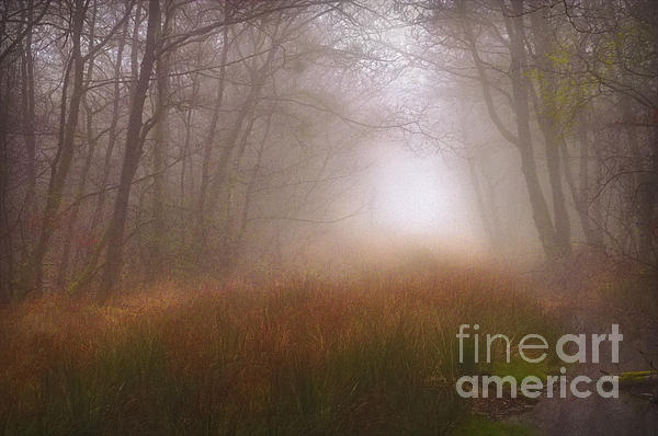 Trees Mist 1 Print by Curtis Radclyffe
