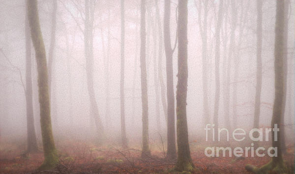 Trees Mist 2 Print by Curtis Radclyffe