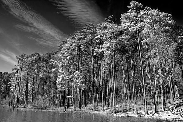 Tom Gari Gallery-Three-Photography - Trees On The Rivers Edge