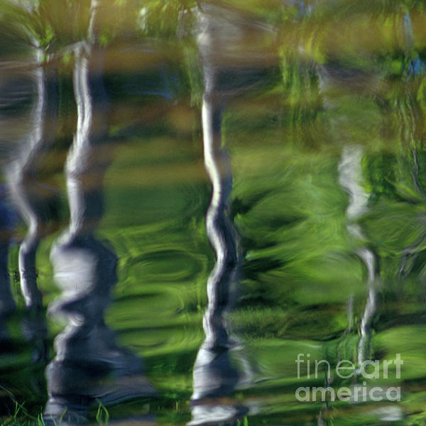 Trees Reflections On The River Print by Heiko Koehrer-Wagner