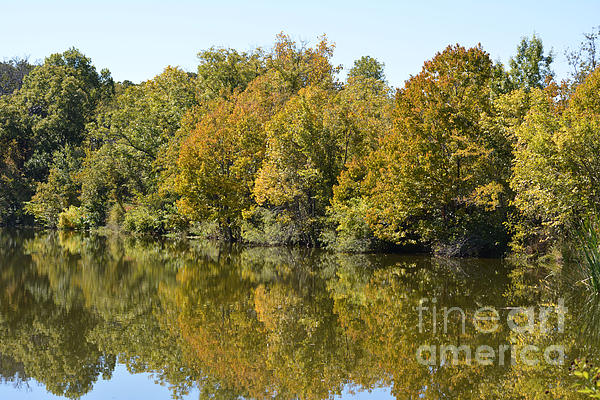 Trees Starting To Have Color  Print by Ruth  Housley
