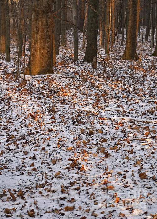 Trees Print by Steven Ralser