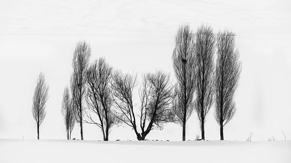 Trees Print by Yavuz Sariyildiz