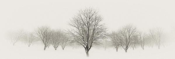 Jim Speth - Treeternity