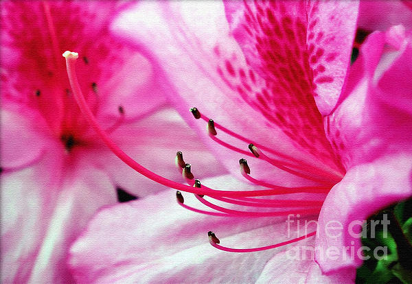 Tropical Azalea Print by Kaye Menner