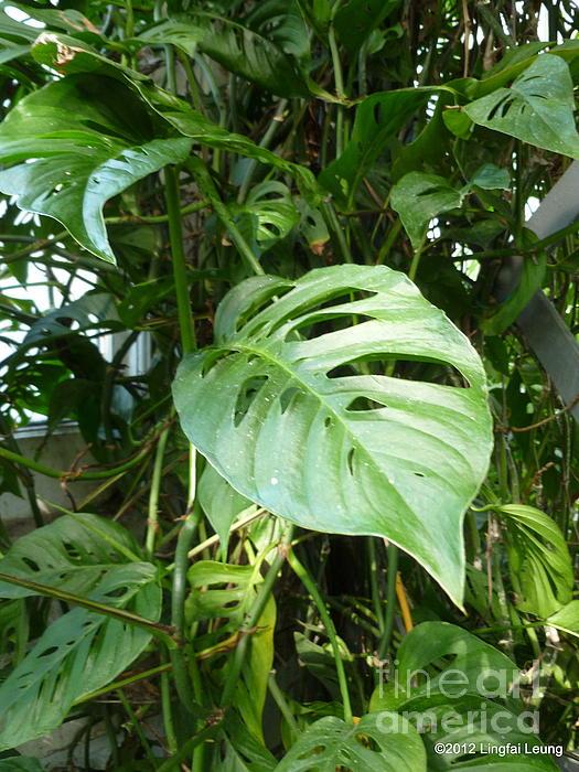 Tropical Green Foliage Print by Lingfai Leung