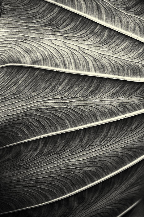 Tropical Leaf No.1 2009 V.2 Print by Joseph Duba