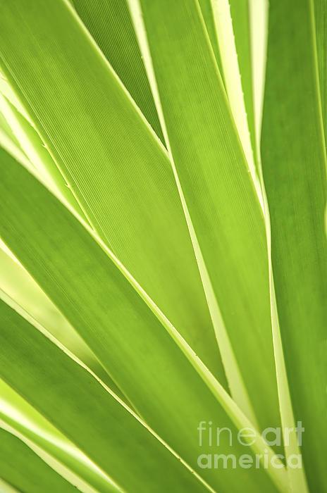 Tropical Leaves Print by Elena Elisseeva