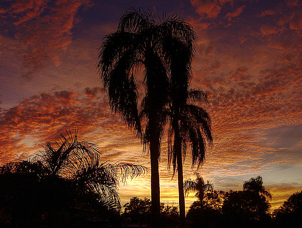 Tropical Sunset Print by Kandy Hurley