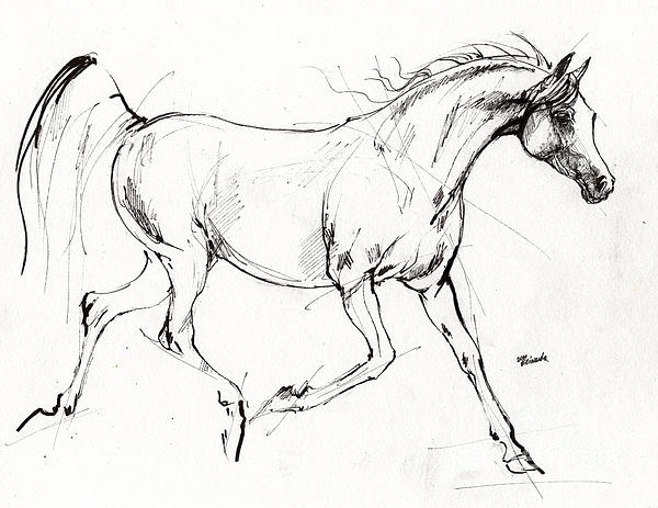 Trotting Arabian Horse Quick Sketch by Angel Tarantella
