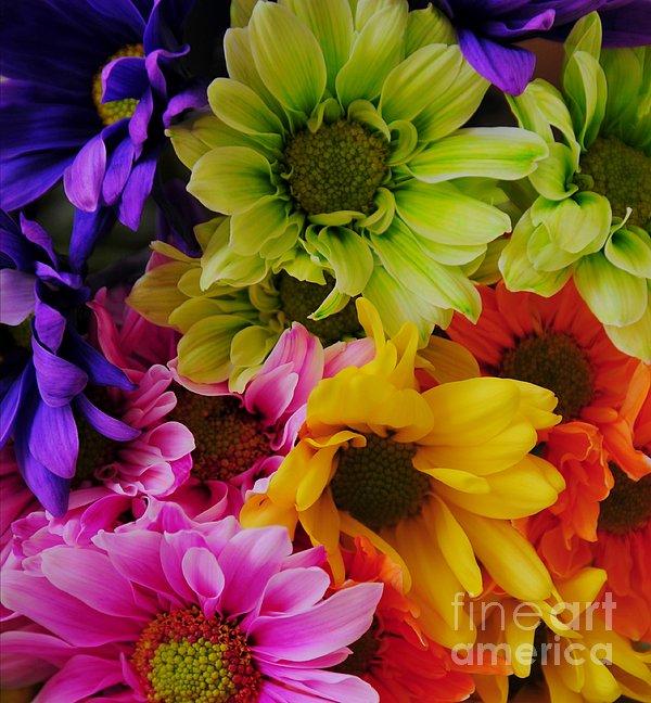 Kathleen Struckle - True Colors