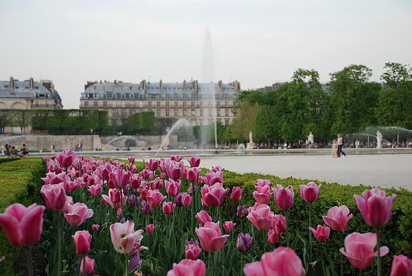 Tuileries Garden In Bloom Print by Jennifer Lyon