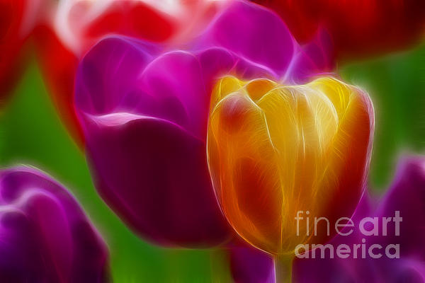 Tulip-7011-fractal Print by Gary Gingrich Galleries