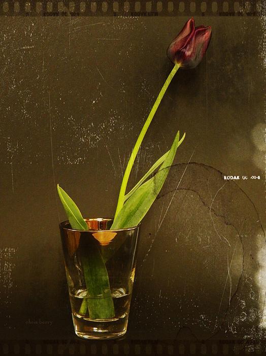 Tulip  Print by Chris Berry