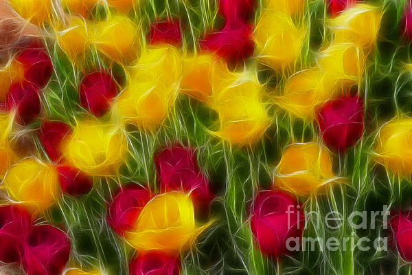 Tulips-7106-fractal Print by Gary Gingrich Galleries