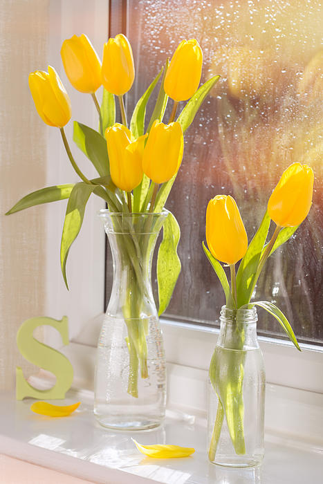 Tulips Print by Amanda And Christopher Elwell