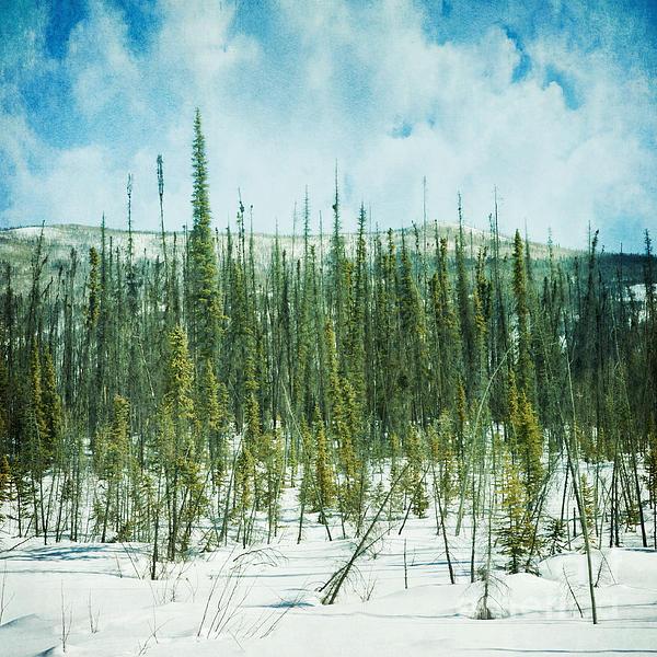 Tundra Forest Print by Priska Wettstein