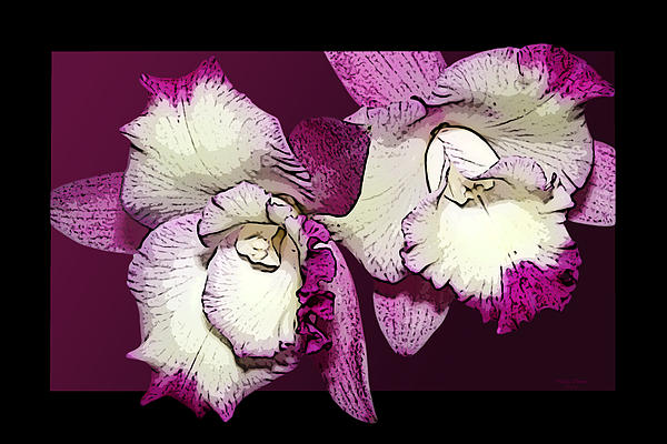 Two Baby Orchids Print by Phyllis Denton