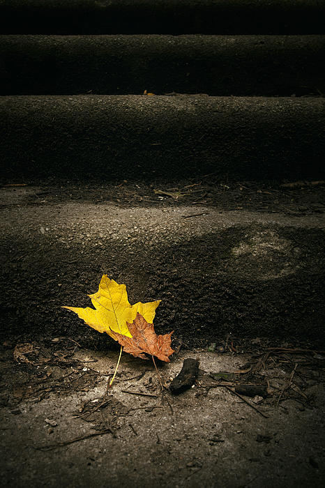 Scott Norris - Two Leaves on a Staircase