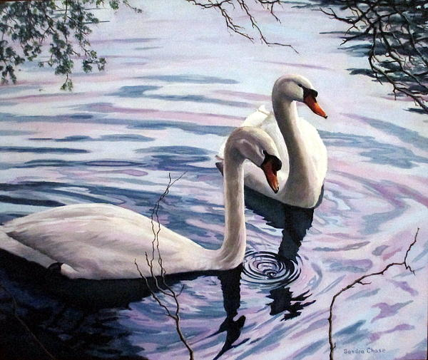 Two Swans A Swimming Print by Sandra Chase