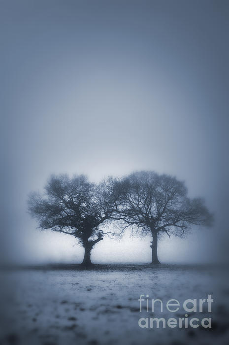Two Trees In Blue Fog Print by Lee Avison