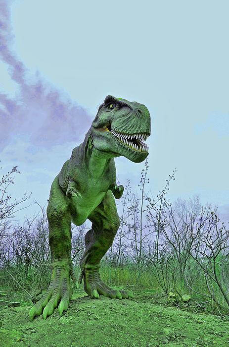 Tyrannosaurus Rex  T- Rex Print by Allen Beatty